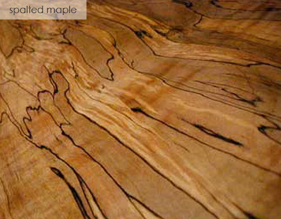 Spalted Maple Wood ~ Species spotlight spalted maple an article from toms