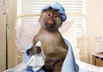 That's one sick monkey