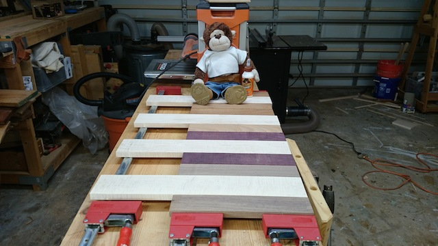 Iggy supervising the glue up